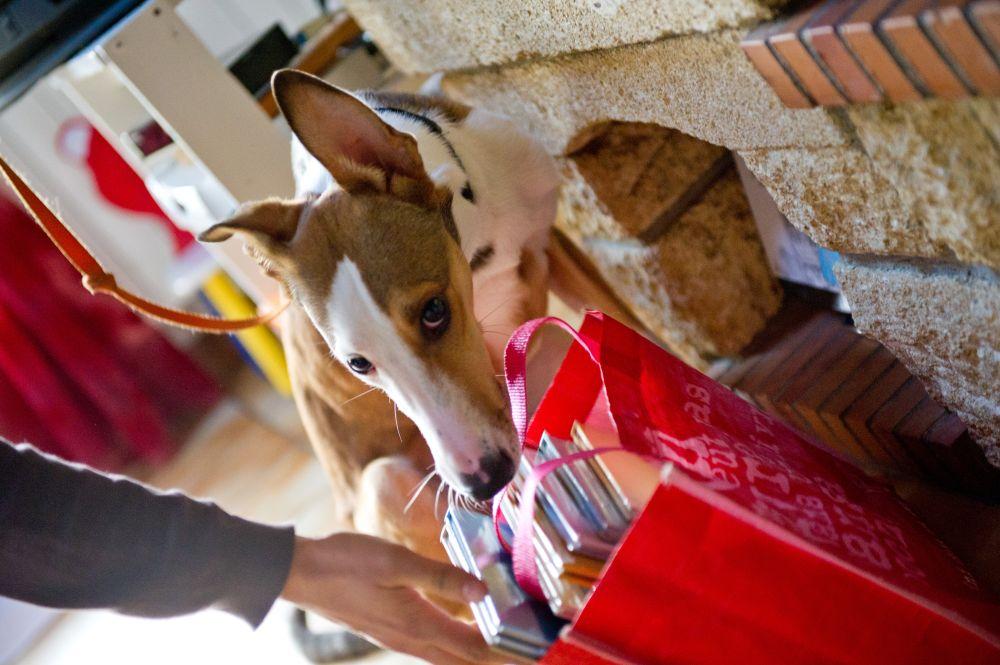 Détection canine punaise de lit - Eco-flair