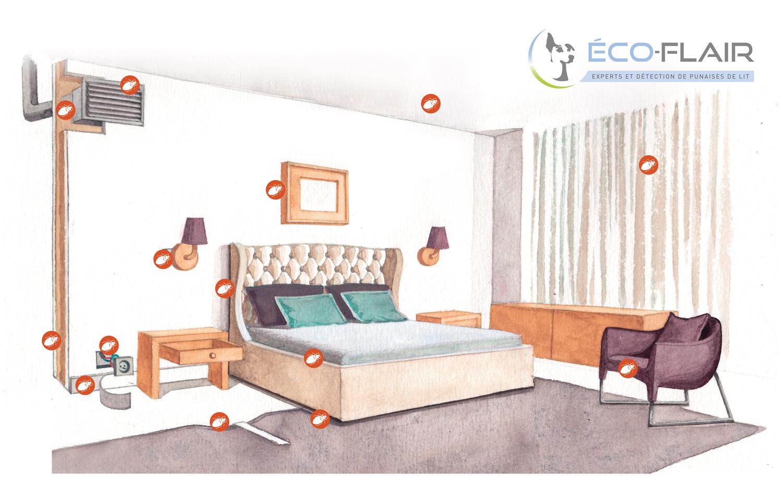 Traitement des punaises de lit eco flair - Punaise de lit transmission ...