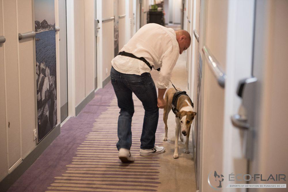 Détection canine de punaises à Marseille